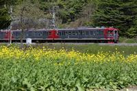 なのはな咲くしなの鉄道沿線