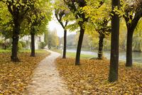ロワン川沿いの黄葉と散歩道