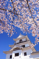 桜と白石城