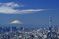 富士山と東京スカイツリーと東京都心ビル群