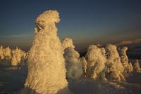 宮城蔵王の樹氷  夕景