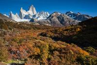 秋のパタゴニア・フィッツロイ峰と紅葉の南極ブナ