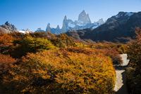秋のパタゴニア・フィッツロイ峰と紅葉の南極ブナのトレイル