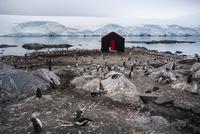 南極のイギリスの基地ポート・ロックロイとジェンツーペンギンのコロニー