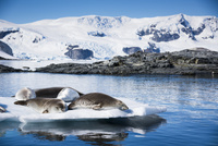氷塊の上で眠るアザラシと雪山 02798000371| 写真素材・ストックフォト・画像・イラスト素材|アマナイメージズ