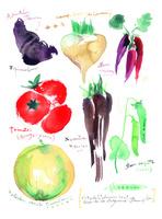 野菜の水彩画(トマトなど)
