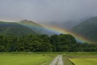 虹とあぜ道
