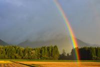 目前の虹立つ