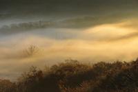 輝く高原の朝霧