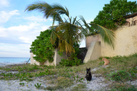 キューバのバラデロのカリブ海と猫