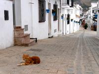 スペインのミハスの街中にいる茶トラ猫
