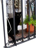スペインのミハスの街中にいる黒猫