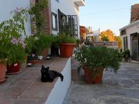 スペインのフリヒリアナの街中にいる黒猫