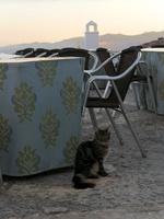 スペインのフリヒリアナの街中にいる猫