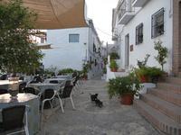 スペインのフリヒリアナの街中にいる猫たち