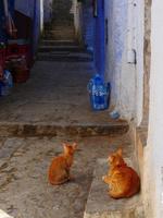 シャウエンの商店前の道にいる茶トラ猫