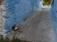 シャウエンの青い街中にいる三毛猫