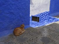 シャウエンの青い街中にいる茶トラ猫