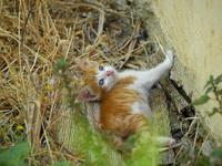 シャウエンの宿で暮らす茶トラ猫の仔猫