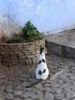 シャウエンの青い街の道で佇む面白い柄の猫
