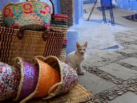 シャウエンの青い街の土産物屋にいる仔猫