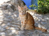 シャウエンの青い街の民家で暮らす茶トラ猫