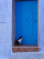 シャウエンの青い街の青い扉の前にいる黒白猫