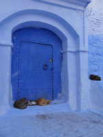 シャウエンの青い街の青い扉の前にいる猫たち