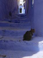 シャウエンの青い街の階段にいる猫