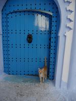 シャウエンの青い街の青い扉にいる茶トラ猫