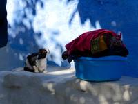 シャウエンの青い街の民家で暮らす白黒猫と洗濯物