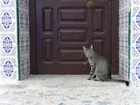 シャウエンの青い街の扉の前にいるサバトラ猫