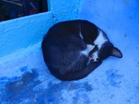 シャウエンの青い街で眠る黒白猫 02812000192  写真素材・ストックフォト・画像・イラスト素材 アマナイメージズ