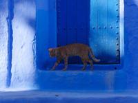 シャウエンの青い街の青い扉の前にいる茶トラ猫