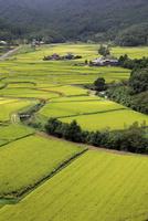 田染荘の秋の水田