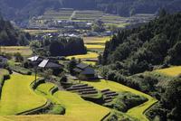 大分県の秋の棚田と集落