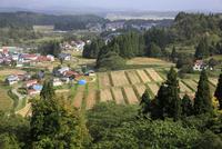 秋の大浦の棚田と集落