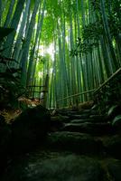 報国寺の竹林 02821000253| 写真素材・ストックフォト・画像・イラスト素材|アマナイメージズ