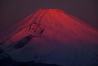 夜明けの紅富士