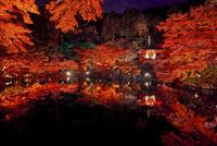 ライトアップされた秋の醍醐寺弁天池 02822000101  写真素材・ストックフォト・画像・イラスト素材 アマナイメージズ