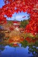 紅葉の美しい大覚寺多宝塔 02822000103| 写真素材・ストックフォト・画像・イラスト素材|アマナイメージズ