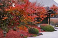紅葉の妙顕寺 02822000141  写真素材・ストックフォト・画像・イラスト素材 アマナイメージズ