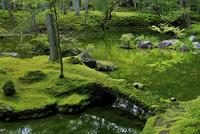新緑の西芳寺 02822000156| 写真素材・ストックフォト・画像・イラスト素材|アマナイメージズ