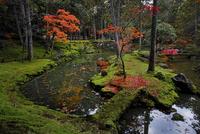 紅葉の西芳寺 02822000158| 写真素材・ストックフォト・画像・イラスト素材|アマナイメージズ