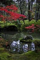 紅葉の西芳寺 02822000159| 写真素材・ストックフォト・画像・イラスト素材|アマナイメージズ