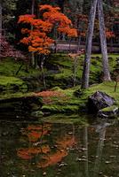 紅葉の西芳寺 02822000160| 写真素材・ストックフォト・画像・イラスト素材|アマナイメージズ