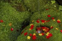 紅葉散る手水鉢 02822000182| 写真素材・ストックフォト・画像・イラスト素材|アマナイメージズ