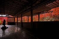 紅葉の高山寺石水院 02822000185| 写真素材・ストックフォト・画像・イラスト素材|アマナイメージズ