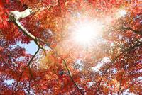 紅葉風景 07000000004| 写真素材・ストックフォト・画像・イラスト素材|アマナイメージズ