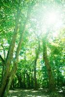 長者ヶ森の木々 秋吉台